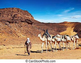 Camels caravan in Sahara Desert, Algeria - Tuareg cameleer...