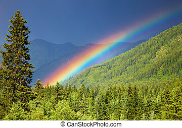 Rainbow over forest at sunset