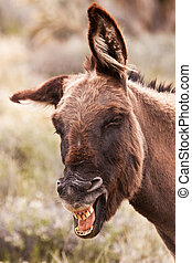 Smiley Face - Silly Smiling Wild Burro Donkey in Nevada...