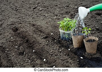 Agriculture - An image of a green plants and watering can