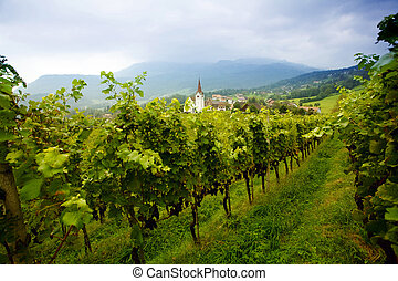 Vineyard - An image of a vineyard and village