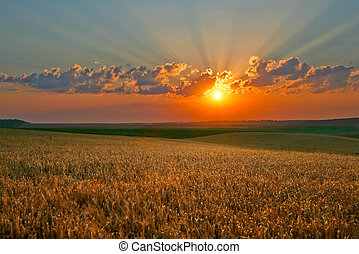 Magic sky - Yellow field on a background of magic sky
