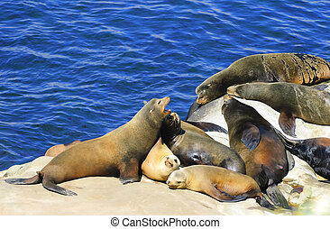 California Sea Lions Lie on the Pacific Ocean Coast - La...