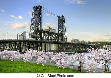 Steel Bridge and Cherry Blossom Trees in Portland Oregon -...