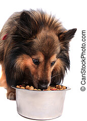 Dog eating out of  food  bowl