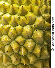 durian - close up of the duriann skin