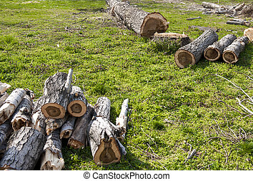 Forest cut down