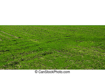 Grassy Field - A large grassy field on a sunny day