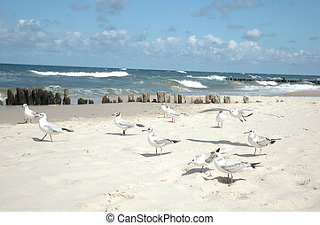 seagulls on the beach - many seagulls on the beach