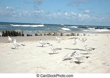 seagulls on the beach - many seagulls on the beach