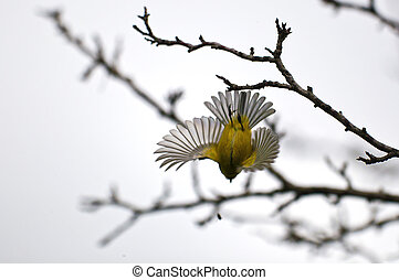Bird hunting a fly in flight