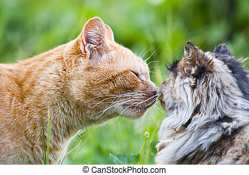 cat kiss - adorable scene of cat kiss