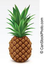 Pineapple - Illustration of fresh pineapple