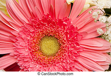 bouquet - beautiful bouquet with daisy and chrysanthemum