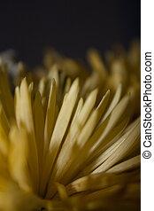 Flower - Macro photography of flowers