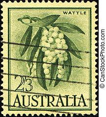 Golden Wattle - Acacia pycnantha - AUSTRALIA - CIRCA 1959: A...