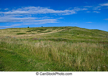 Green hill with blue sky with green grass in summer