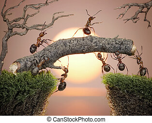 team of ants constructing bridge over water on sunrise or...
