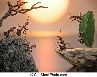 team of ants sailing back home, fantasy - crew of ants...