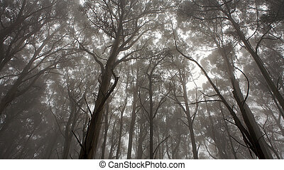 Forrest - A forrest and a view of tree tops, monochrome