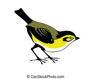 vecteur, silhouette, oiseau, blanc, fond