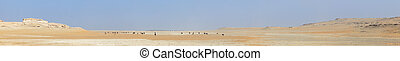 Desert camel herd panorama - A herd of camels grazes on the...
