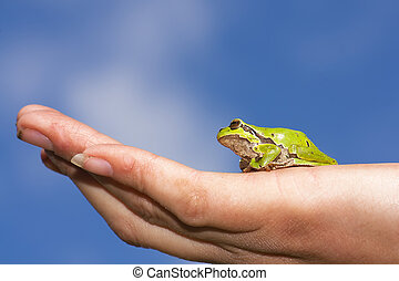 European tree frog and hand - A European tree frog sitting...