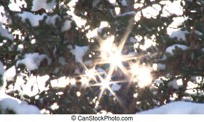 Snow Tree Sunburst 2 - Starburst starlike rays generated...