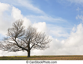 Single tree on hill against stunning vibrant blue sky and...