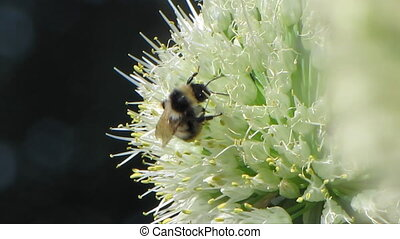 Bee and flowers 3