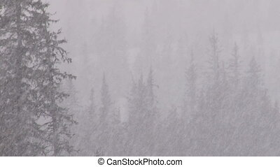 Blizzard Forest 2 - Heavy snowfall in a spruce forest 30fps,...