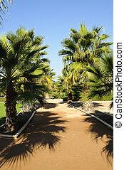 lorca,  Park, Drzewa,  Federico,  garcia, dłoń