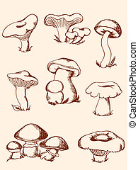 set of vintage forest mushrooms - set of vector hand-drawn...
