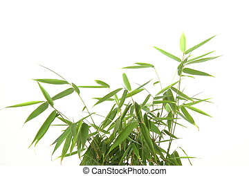 Bamboo leaves - bamboo leaves on white background