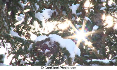 Snow Tree Sunburst 1 - Dazzling sunlight illuminates...