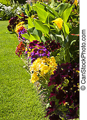 Colorful garden flowers - Beautiful bright colorful flower...