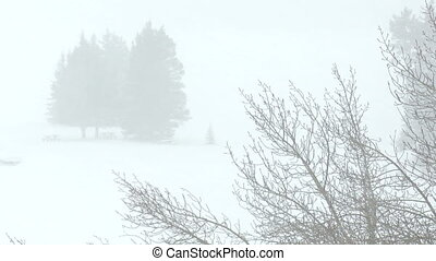 Snowstorm in park - Heavy snowfall in park with trees