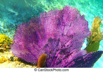 Caribbean coral reef Mayan riviera colorful species...