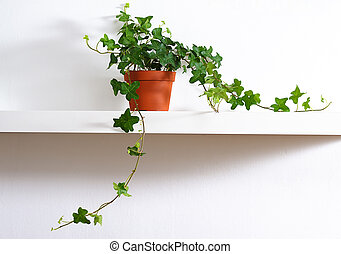 ivy in pot standing on white shelf