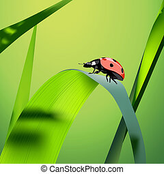 Vector grass - Summer Illustration (green vector grass and...