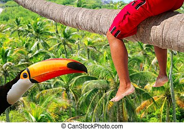 Horizontal palm tree trunk sitting legs tropical toucan