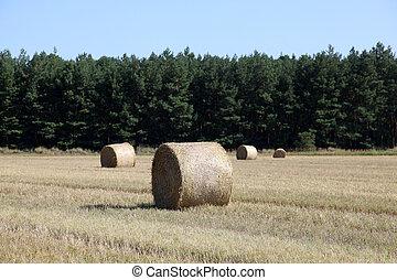 Rolls at wheat field.