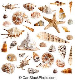 Many seashells