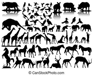 vector silhouettes of wildlife  on a white background