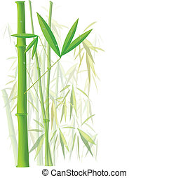 Bamboo - Image of colorful, green bamboo isolated on a white...