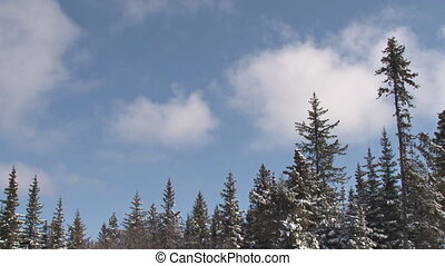Snowy Forest Cloudy Sky - Real-time clouds move over a...