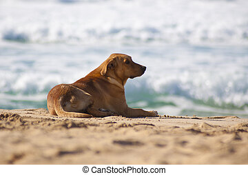Dog resting at the sandy beach. - Dog lying and resting at...