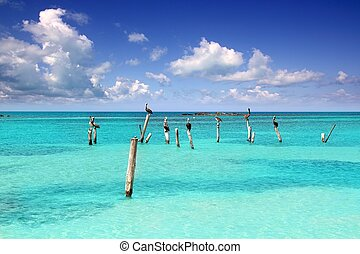 Caribbean pelican turquoise beach tropical sea