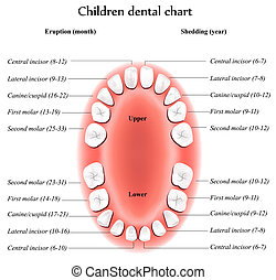 Children dental chart - Vector children dental chart Shows...