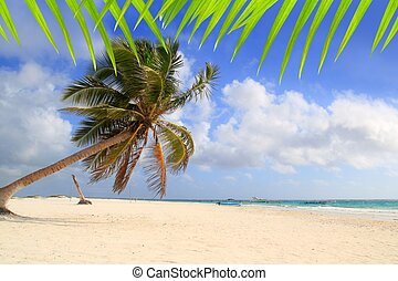 Coconut palm trees tropical typical background turquoise...